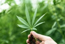 A man holding a marijuana leaf