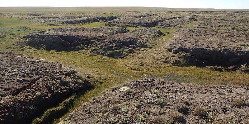 Canadian High Arctic polygon mire, image credit: Jennifer Galloway