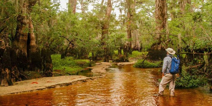 David Stahle in North Carolina's Black River. Photo by Dan Griffin.