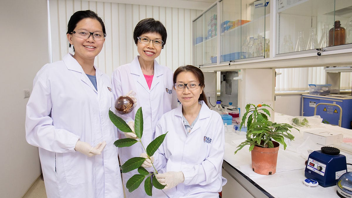 Six plants native to Southeast Asia are promising cancer warriors