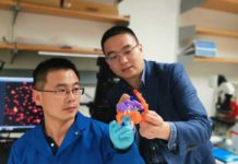 Study authors Jingqiang Wang and Professor Zhen Gu with a model of insulin.