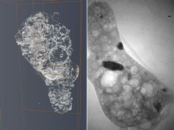Left: A 3D image that allowed the researchers to discover the distribution of elements within the sample Right: An X-Ray Tomography scan showing the interior structure of the particle Credit: University of Bristol/Diamond Light Source
