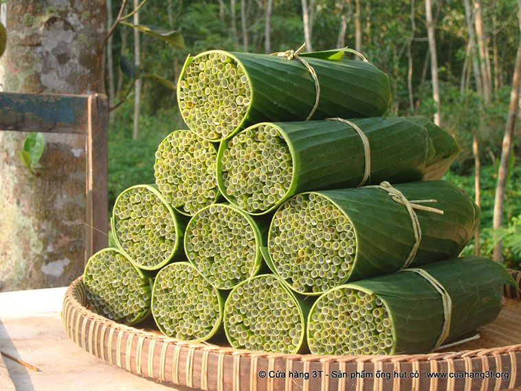 If the batch of straws is going to be sold fresh, a bundle of 100 straws is collected and then wrapped in banana leaves.