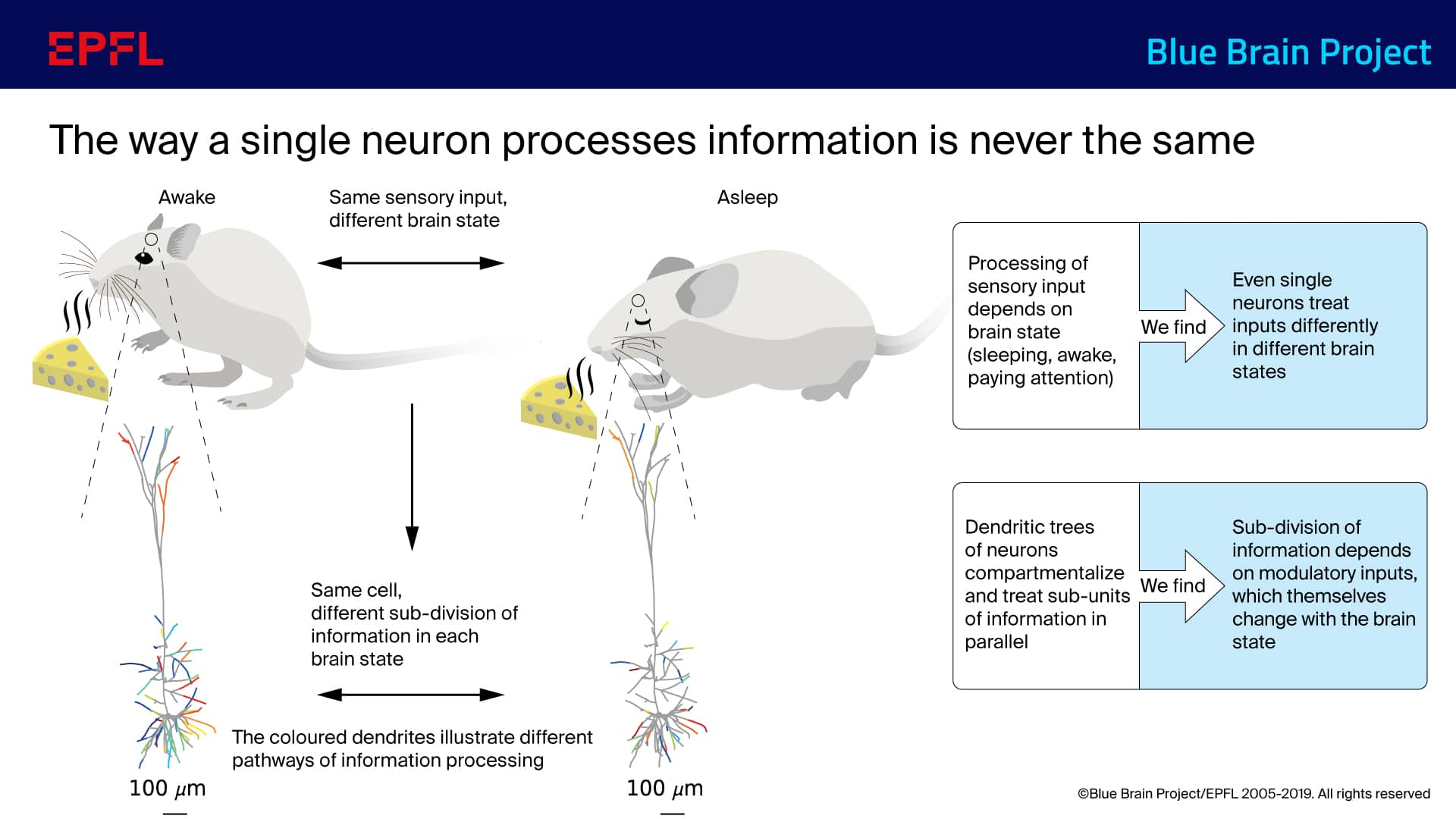 The way a single neuron processes information is never the same