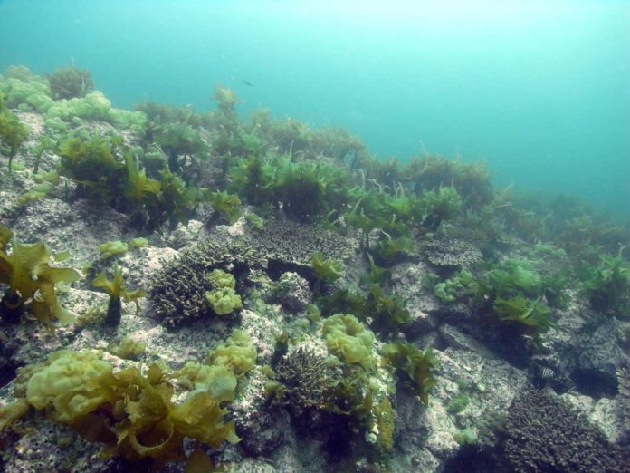 Corals and kelp.Soyoka Muko/Nagasaki University