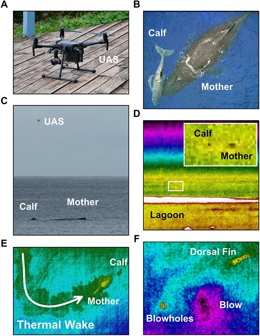 Visible and infrared spectrum images of: the DJI Matrice 200 unoccupied aerial system (UAS; i.e., drone) used in this study