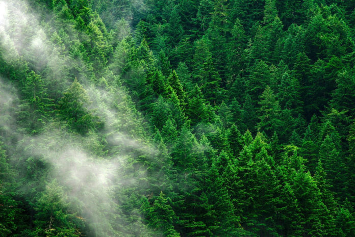 Planting 1 billion hectares of forest could help check global warming
