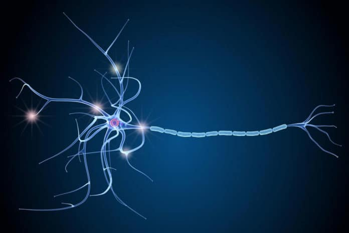 The death of nerve cells (depicted here) causes disability in MS.