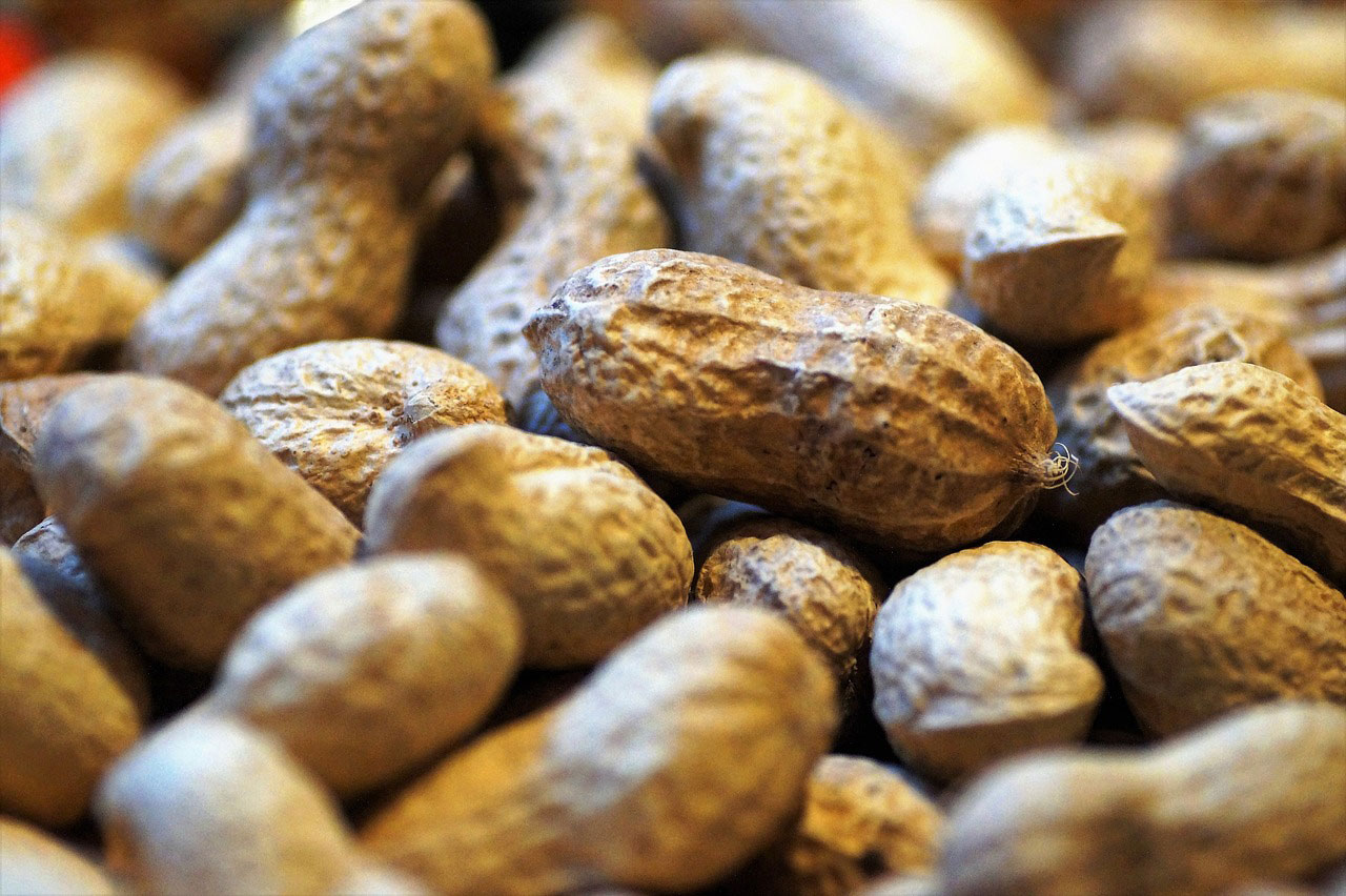 Early introduction of peanuts in infants to reduce allergy risk