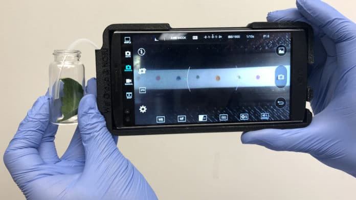 The handheld technology allows farmers to identify plant diseases in the field. Photo credit: NC State University
