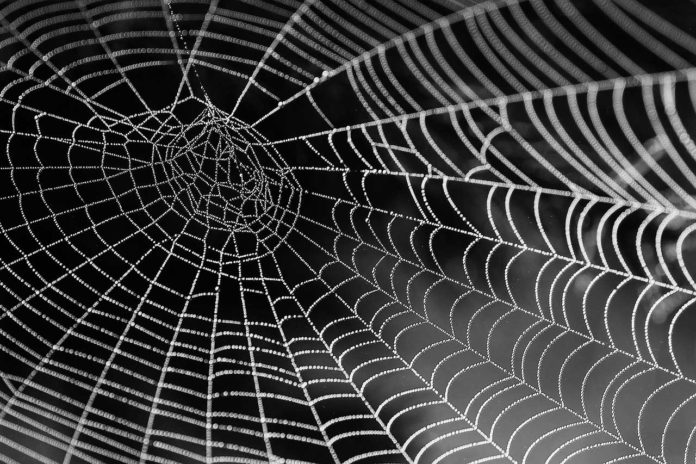 Scientists discovered a protein in strongest spider web material