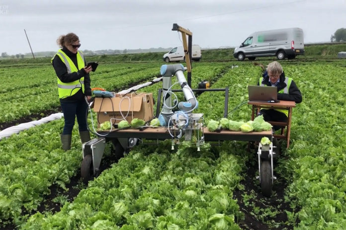 A robotic harvester, dubbed the 'Vegebot', has been trained to identify and harvest iceberg lettuce, a crop which has so far resisted automation. / Image: University of Cambridge