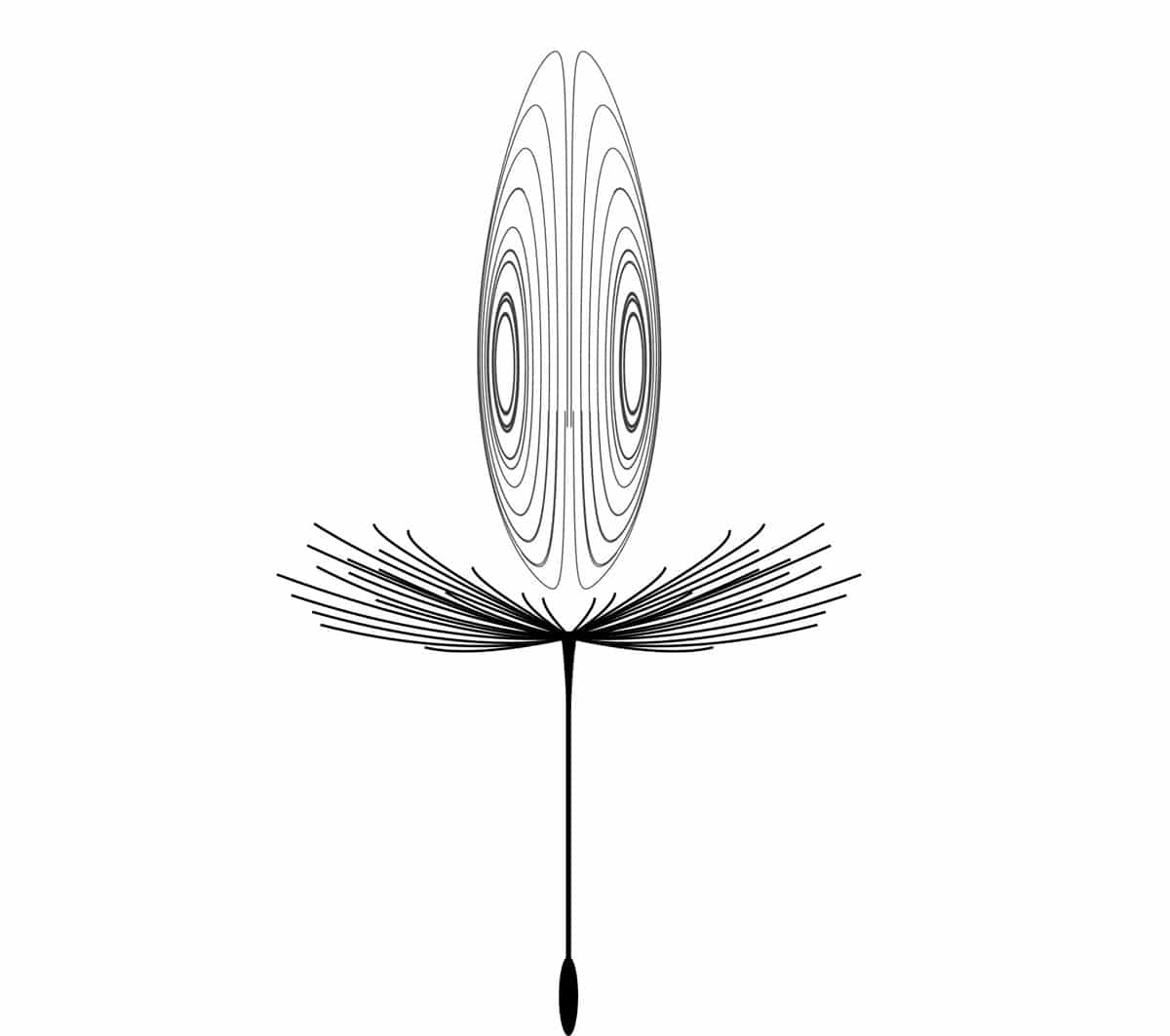 Diagram of the vortex ring that forms underneath a pappus, allowing dandelion seeds to travel several kilometers. © Pier Giuseppe Ledda