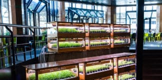Caulys's-greenhouses