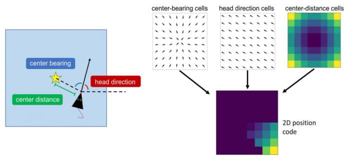 Spatial coding in rat's postrhinal cortex. Neurons in the rat postrhinal cortex encode the egocentric bearing and distance of the geometric center of the local environment during free foraging, as well as the animal's head direction in allocentric coordinates. CREDIT Diagram is included in the study, and was provided by Patrick A. LaChance.