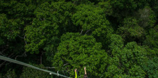 View from the top of a measurement tower, where researchers monitor critical forest canopy processes such as photosynthesis, plant water fluxes, leaf characteristics, and growth. (Credit: Joao M. Rosa, AmazonFACE)