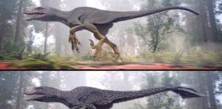 Dinosaur feathers. Image Credit: College of Charleston