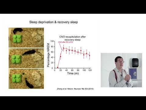 Researcher discusses the mystery of why we sleep