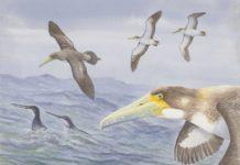 'Protodontopteryx ruthae'. Illustration by Derek Onley. Credit: Canterbury Museum.