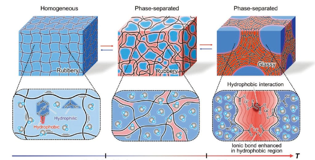 Molecular structures and the mechanisms behind instant thermal hardening of the hydrogel. (Nonoyama T. et al., Advanced Materials, November 18, 2019)