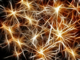 How the brain produces cognition is finally understood?
