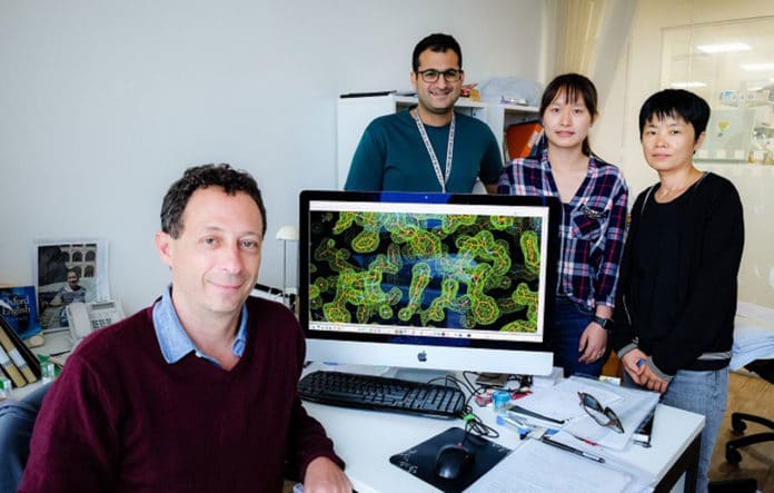 Scientists uncovered the structure of key pneumonia virus enzyme