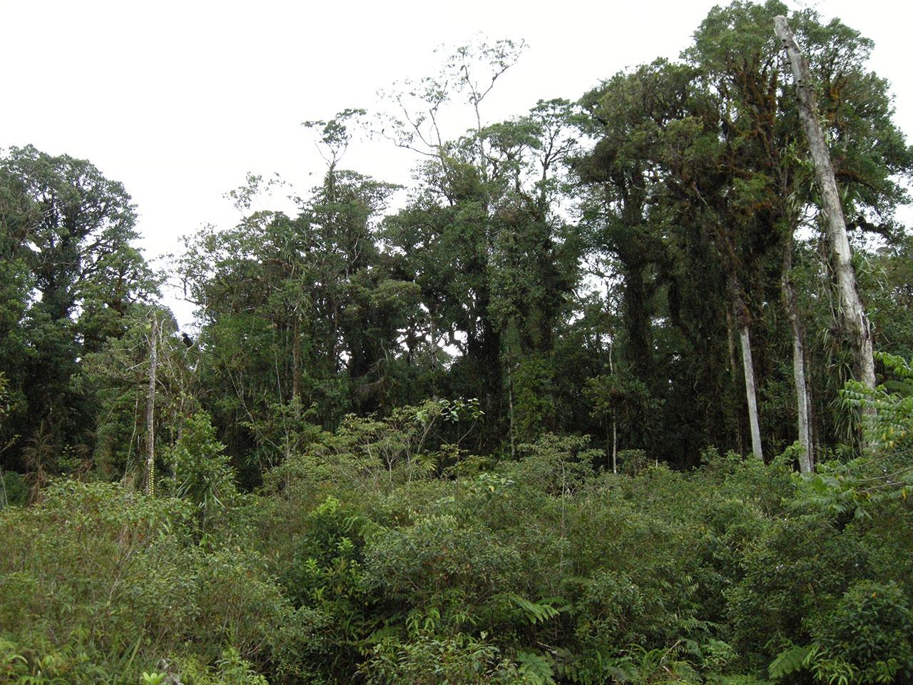 Degraded montane forest in Taliabu Image: Bram Demeulemeester