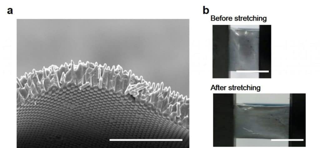 Freestanding SiMPF after peeling off from the Si parent (scale bar: 100μm).
