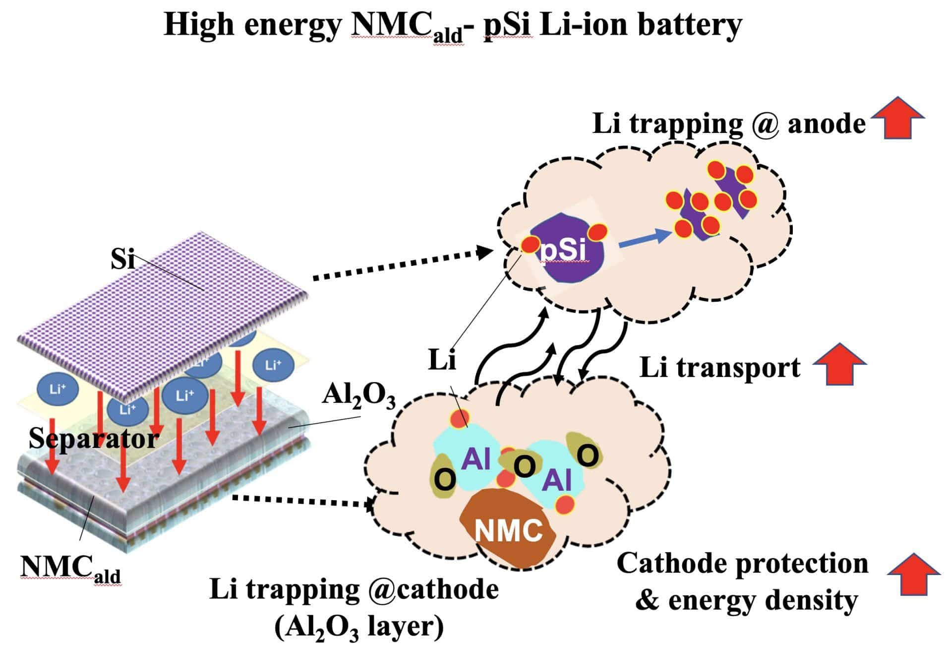 Rice University engineers built lithium-ion batteries with silicon anodes and an alumina layer to protect cathodes from degrading. Illustration courtesy of the Biswal Lab
