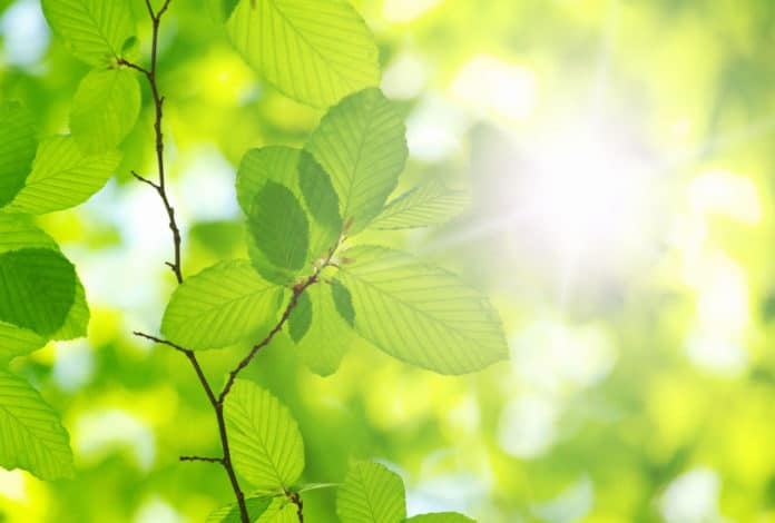 Reversing electrons' course through nature's solar cells
