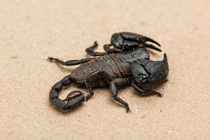 Scientists revealed the oldest known scorpion on Earth