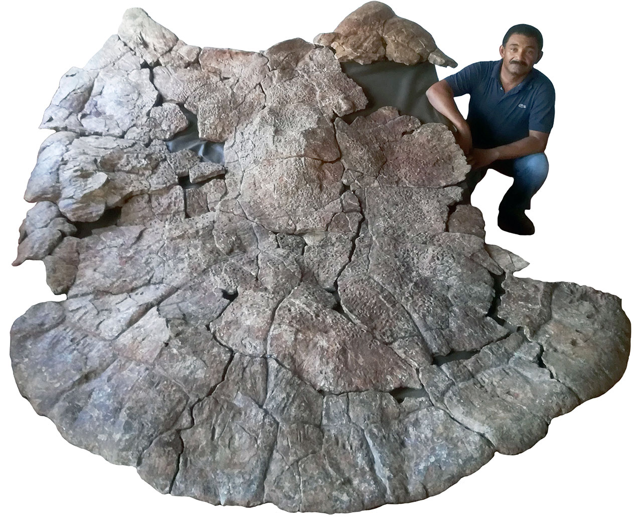 Venezuelan Palaeontologist Rodolfo Sánchez and a male carapace of Stupendemys geographicus, from Venezuela, found in 8 million years old deposits. (Image: Jorge Carrillo)