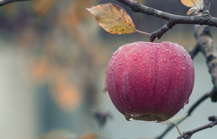 Edible coating materials to improve shelf life of fruit crops