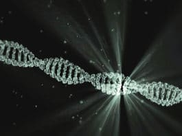 African DNA study detects mysterious human species
