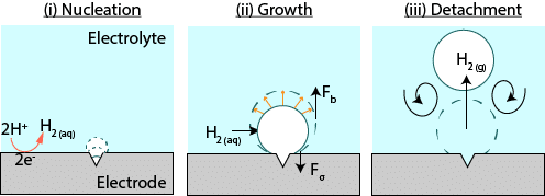 The formation of bubbles on the surface of an electrode