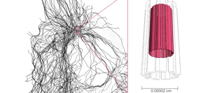 Schematic view of the nano-cylinder (fuchsia) which is in the center of the cell skeleton (in black on the image). © UNIGE
