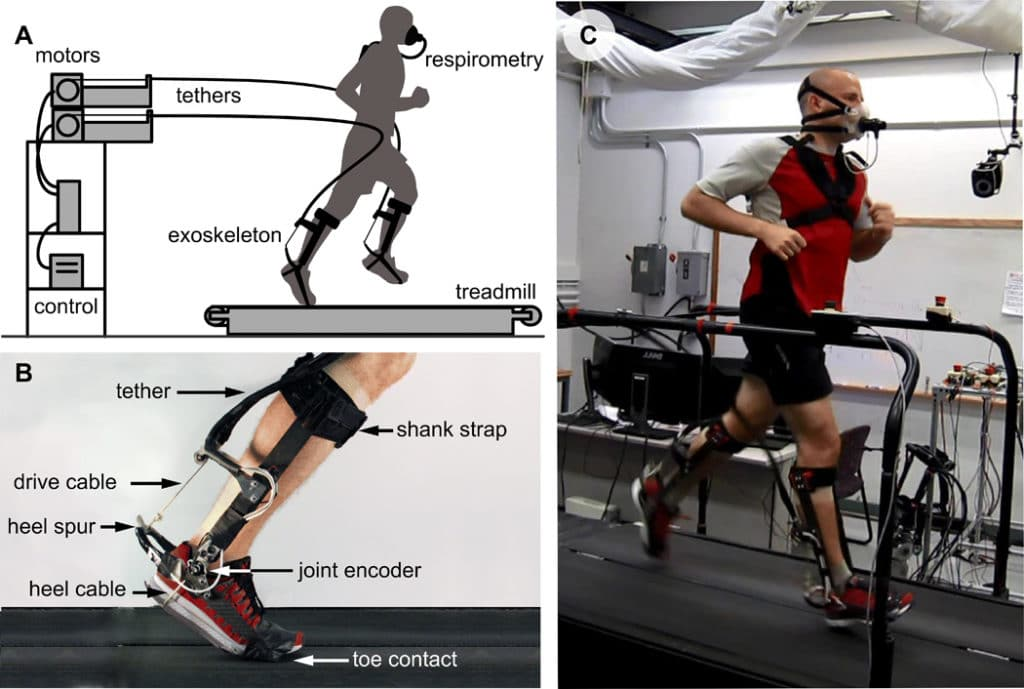 (A) Exoskeleton emulator testbed. A participant runs on a treadmill while wearing bilateral ankle exoskeletons actuated by motors located off-board with mechanical power transmitted through flexible Bowden cables. (B) Ankle exoskeleton. The ankle exoskeleton attaches to the user by a strap above the calf, a rope through the heel of the shoe, and a carbon fiber plate embedded in the toe of the shoe. The inner Bowden cable terminates on a 3D printed titanium heel spur that is instrumented with strain gauges for direct measurement of applied torque. A magnetic encoder measures ankle angle. (C) Participant running on the treadmill with bilateral ankle exoskeletons. Metabolic data are collected through a respiratory system by measuring the oxygen and carbon dioxide content of the participant's expired gasses.