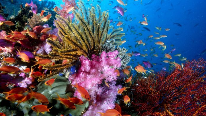 New tools to determine climate-adaptive coral reefs