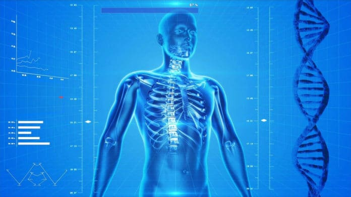 Scientists developed the world's most sophisticated lab model of the human body