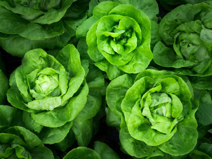 Space-grown lettuce is as nutritious as counterparts grown on the Earth