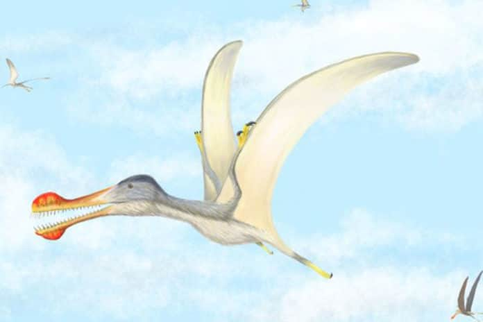 Three new species of toothed pterosaurs have been discovered CREDIT Nizar Ibrahim, University of Detroit Mercy