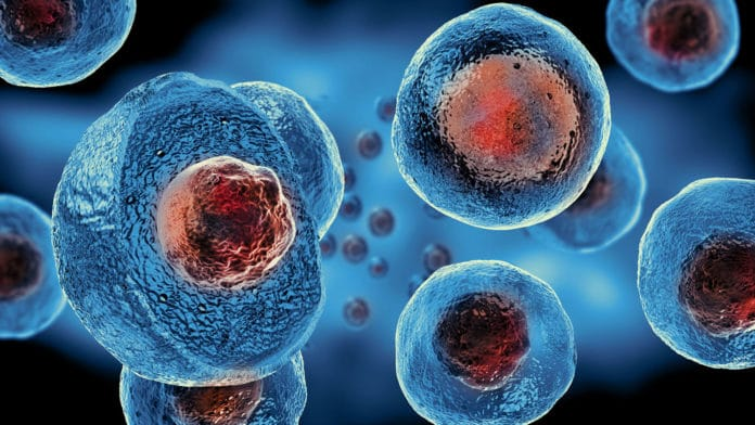 These new stem cells with the ability to generate new bone