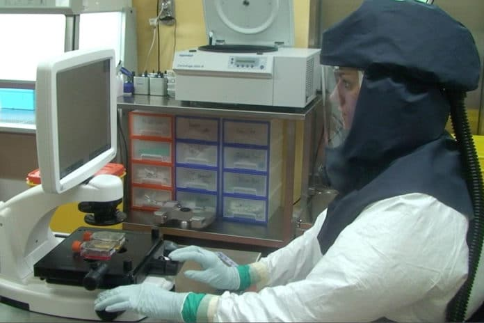 Working at the high-security laboratory of the Institute of Virology and Immunology (IVI). Credit: IVI