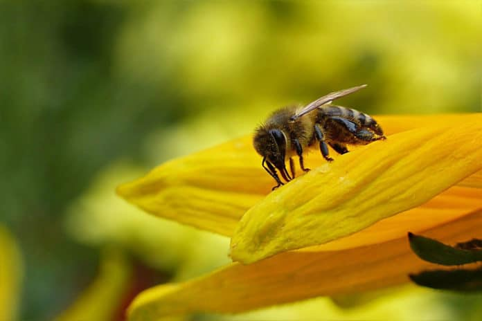 Honey bee colonies are increasingly suffering from a viral disease