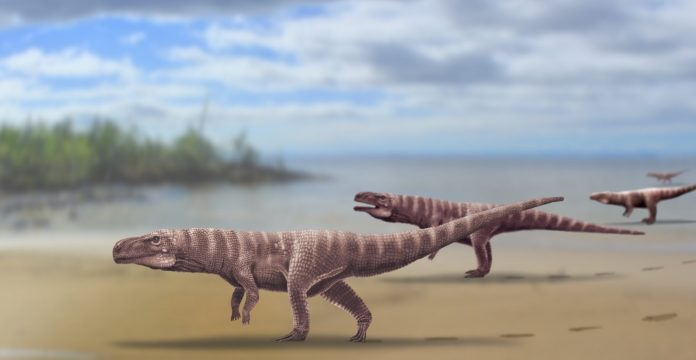 Some species of ancient crocodiles walked on their two hind legs like dinosaurs