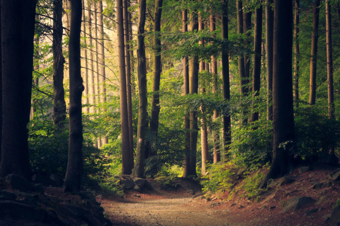 Climate change is altering forest structure, making forests less of a carbon sink