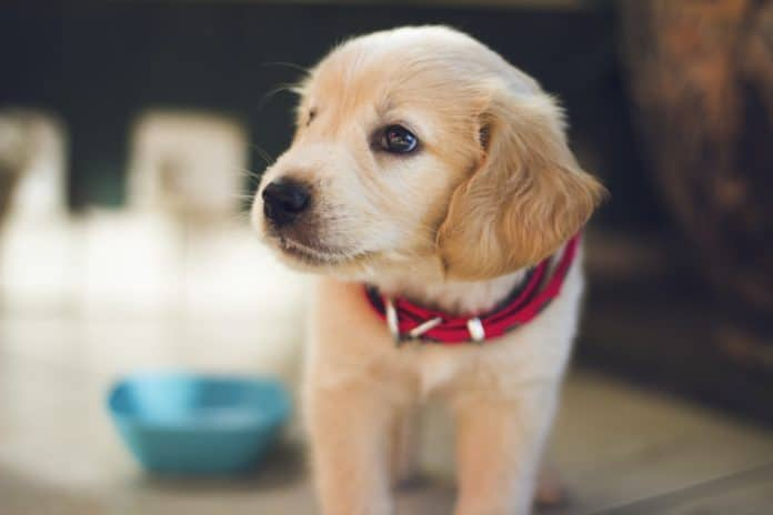 Dogs use Earth's magnetic field to navigate themselves