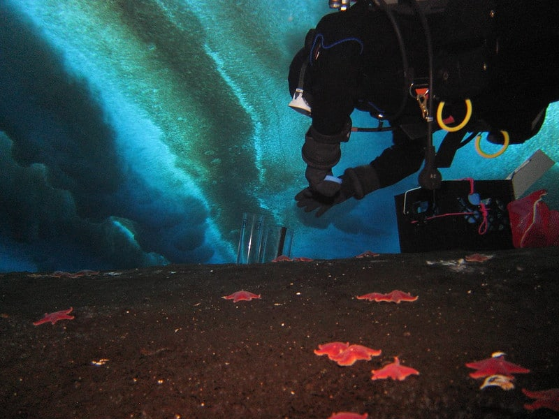 A scientist explores the shallow areas of Antarctica looking for microbial mats, which are telltale signs of areas where methane may be released from underground methane deposits