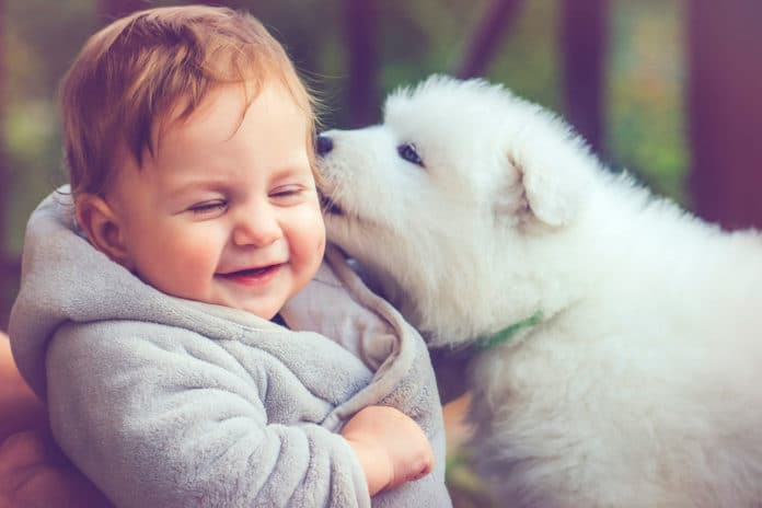 Pet dogs can improve social-emotional development in young children
