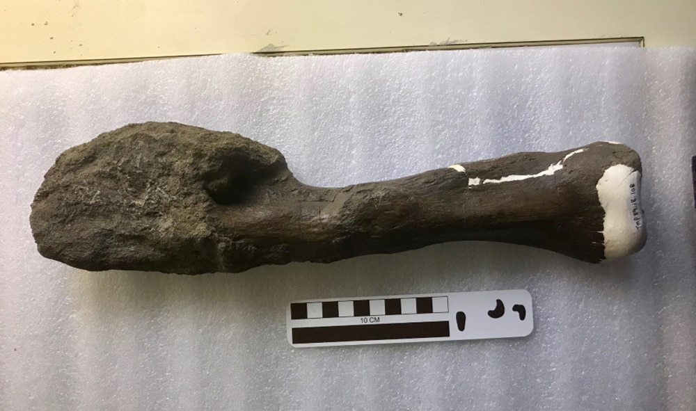 First case of bone cancer discovered in dinosaurs, scientists claim